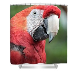 Parrot Profile Shower Curtain by Carol Groenen