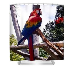 Parrot Shower Curtain by Susan Garren