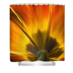 Parrot Tulip - D008405 Shower Curtain by Daniel Dempster