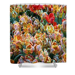 Parrot Tulips Shower Curtain