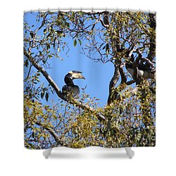 Hornbills With A Black Eye Shower Curtain by Four Hands Art