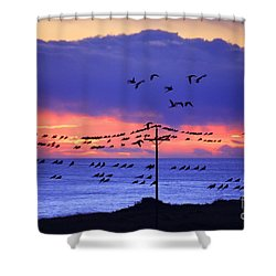 Shower Curtain featuring the photograph Parrots by Bernardo Galmarini