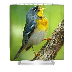 Parula Song Shower Curtain
