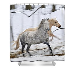 Paso Fino Mares Take Flight Shower Curtain by Patricia Keller