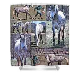 Paso Fino Stallion Horsing Around Shower Curtain by Patricia Keller