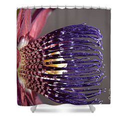 Passiflora Alata - Passion Flower - Ruby Star - Ouvaca Shower Curtain by Sharon Mau