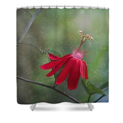 Passiflora Flower Shower Curtain by Kim Hojnacki