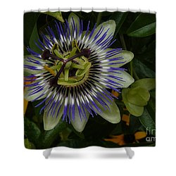 Shower Curtain featuring the photograph Passion Flower by Jane Ford