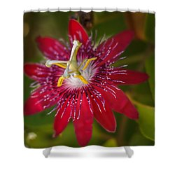 Shower Curtain featuring the photograph Passion Flower by Jane Luxton