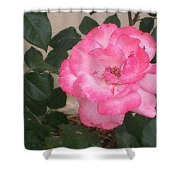 Passion Pink Shower Curtain by Jewel Hengen