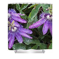 Passion Vine Flower Rain Drops Shower Curtain by Rich Franco