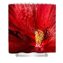 Passionate Ruby Red Silk Shower Curtain by Georgia Mizuleva