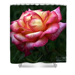 Passionate Shades Of A Perfect Rose Shower Curtain