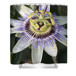 Passionflower Shower Curtain by Richard Thomas