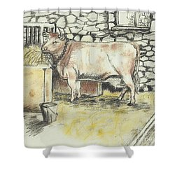 Cow In A Barn Shower Curtain