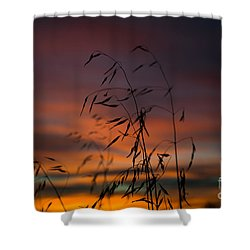 Pastel Moment Shower Curtain