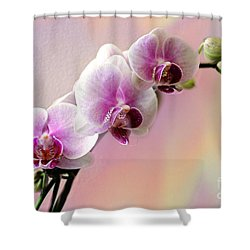 Pastel Rainbow Orchid Shower Curtain