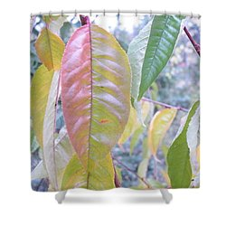 Pastel Symmetry  Shower Curtain by Brian Boyle