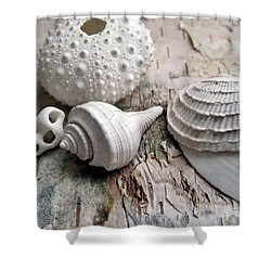 Pastel Urchin White Corals Birch Bark Shower Curtain by Danielle  Parent