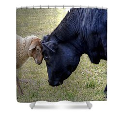 Pasture Pals Shower Curtain by Charlotte Schafer