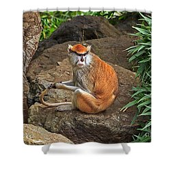 Shower Curtain featuring the photograph Patas Monkey by Kate Brown
