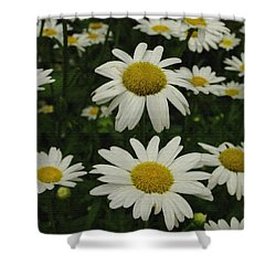 Shower Curtain featuring the photograph Patch Of Daisies by James C Thomas