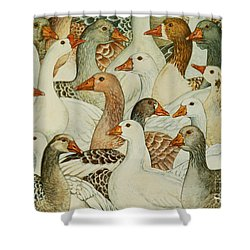 Patchwork Geese Shower Curtain by Ditz