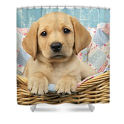 Patchwork Puppy Dp793 Shower Curtain by Greg Cuddiford