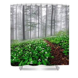 Path In The Mist Shower Curtain by Evgeni Dinev