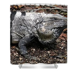 Patience Shower Curtain by Terry Reynoldson