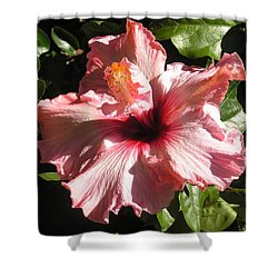 Patio Pink Shower Curtain