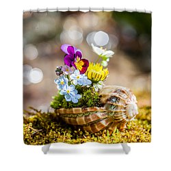 Patterns In Nature Shower Curtain