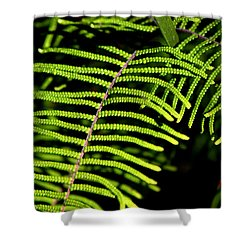 Shower Curtain featuring the photograph Pauched Coral Fern by Miroslava Jurcik