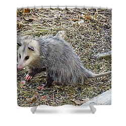 Pawing Possum Shower Curtain by MTBobbins Photography