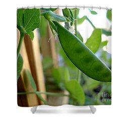 Pea Pod Growing Shower Curtain