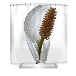 Peace Lily. Shower Curtain