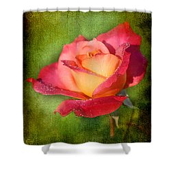 Peace Rose Shower Curtain by Joan McCool