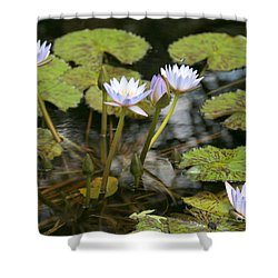 Peaceful Water Lily Pond Shower Curtain