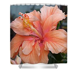Shower Curtain featuring the photograph Peach And Cream by Lingfai Leung