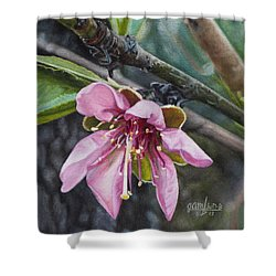 Shower Curtain featuring the painting Peach Blossom by Joshua Martin