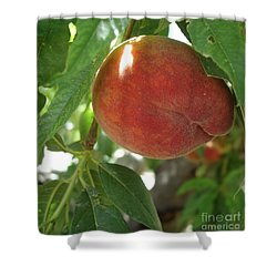 Peach Shower Curtain by Kerri Mortenson