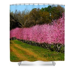 Shower Curtain featuring the photograph Peach Orchard In Carolina by Lydia Holly