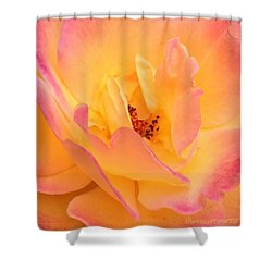 Peach Parfait  Shower Curtain