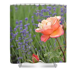 Peach Roses In A Lavender Field Of Flowers Shower Curtain by P S
