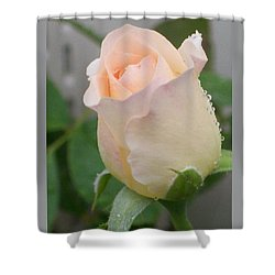 Fragile Peach Rose Bud Shower Curtain by Belinda Lee