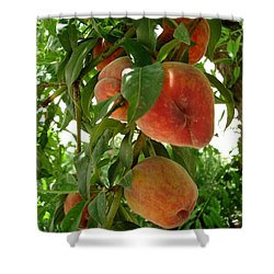Shower Curtain featuring the photograph Peaches On The Tree by Kerri Mortenson
