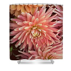 Peachy Pink Dahlia Shower Curtain