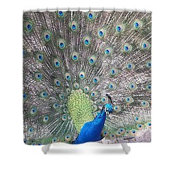 Shower Curtain featuring the photograph Peacock Bow by Caryl J Bohn