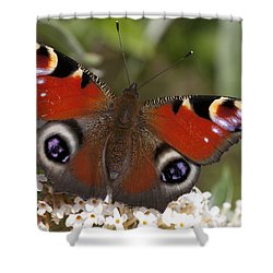 Peacock Butterfly Shower Curtain by Richard Thomas