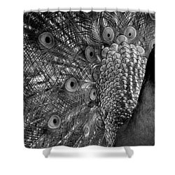 Shower Curtain featuring the photograph Peacock Bw by Ron White